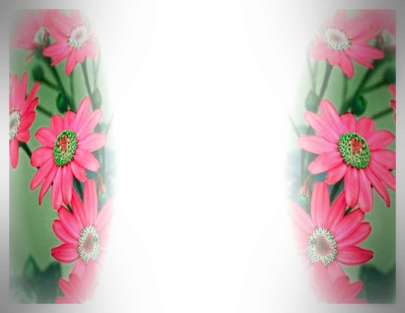 Red daisy flower border hd background free #1148