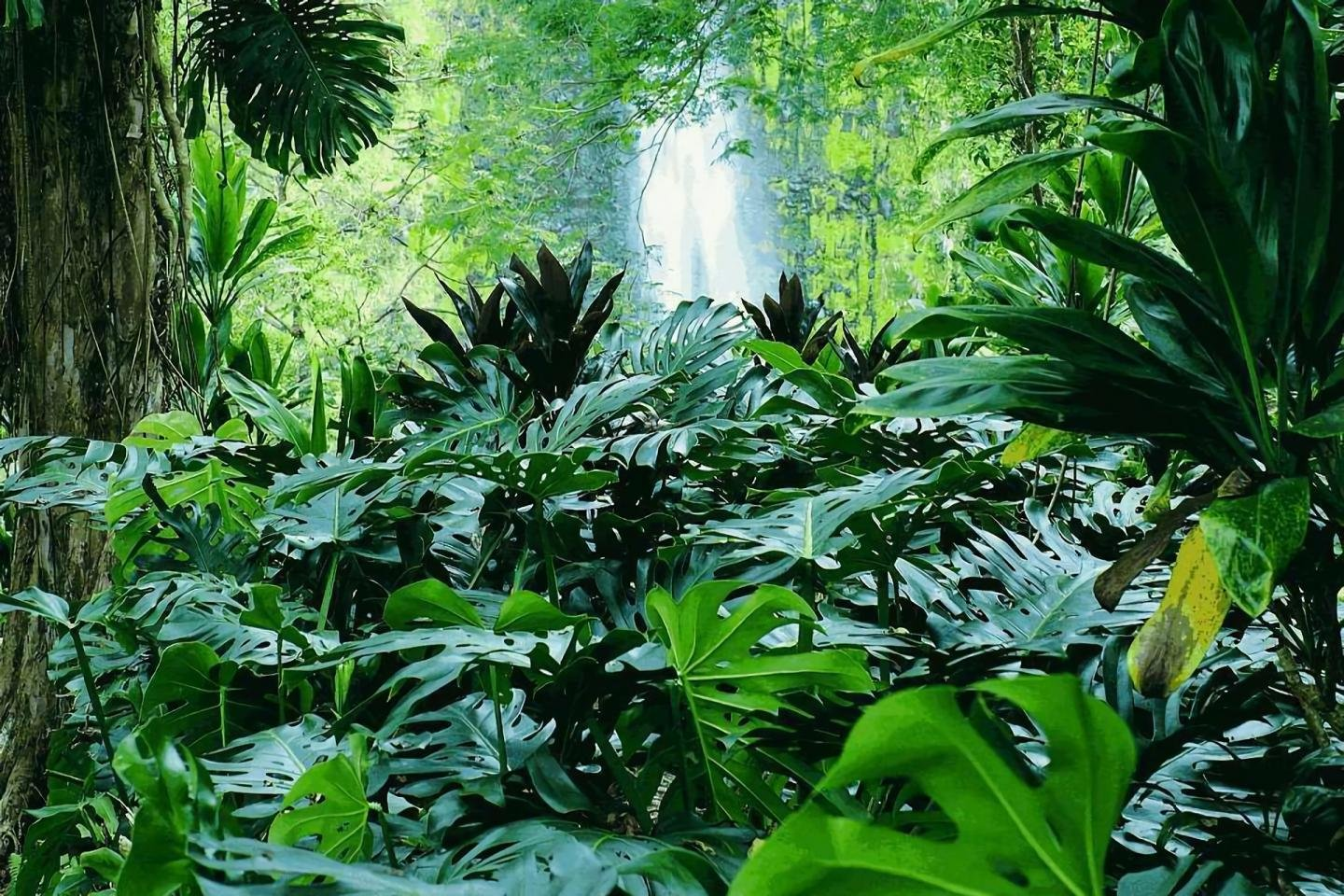 green plants, jungle ppt background #4996