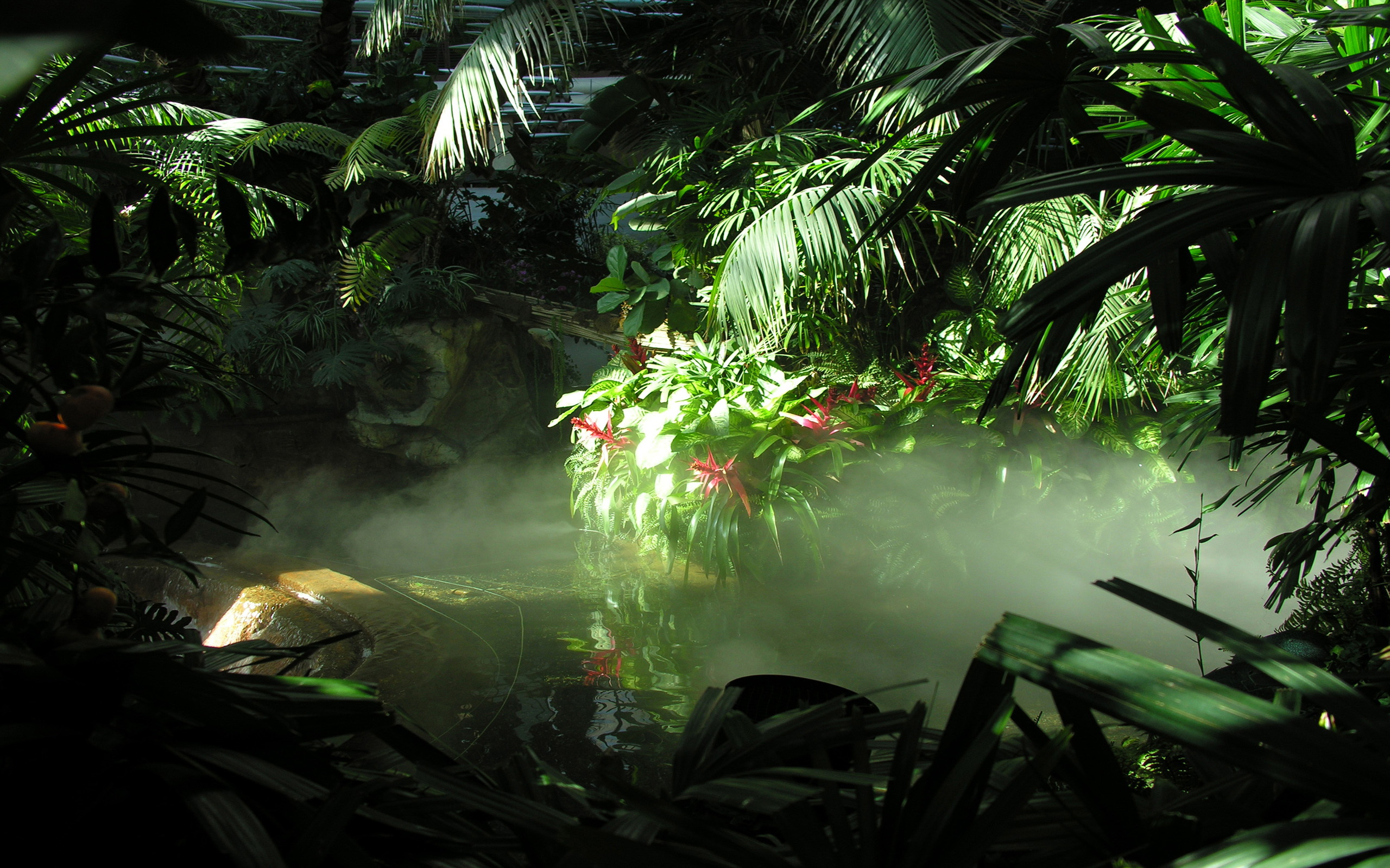 jungle with sunlight background #4974