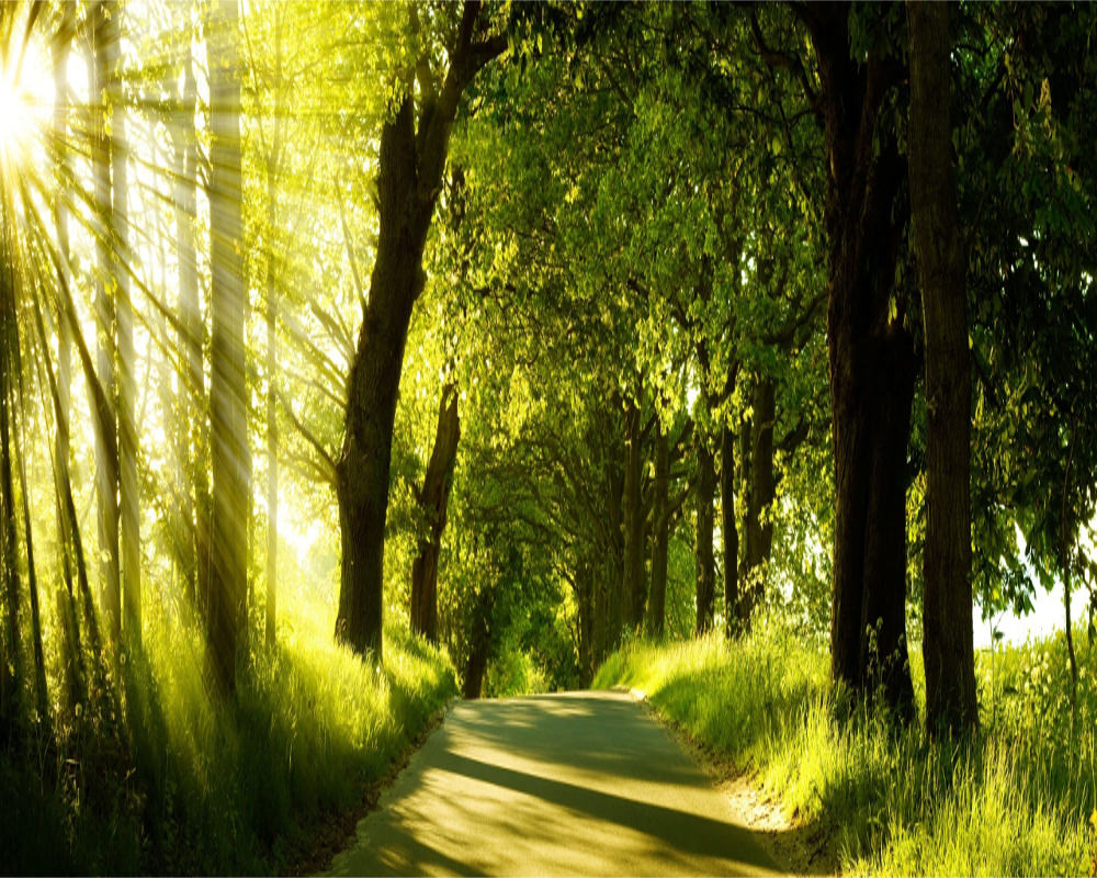 light road green nature wallpapers free download #1585
