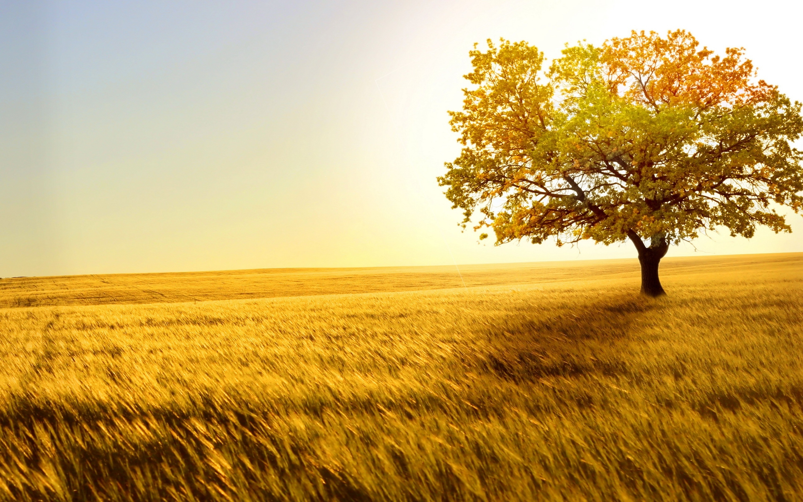 nature powerpoint slide template free, yellow tree and wheat #1568