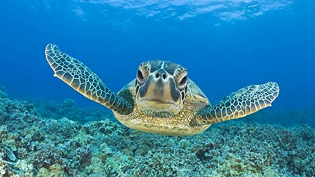 sea background photos download, ​​turtle #2160