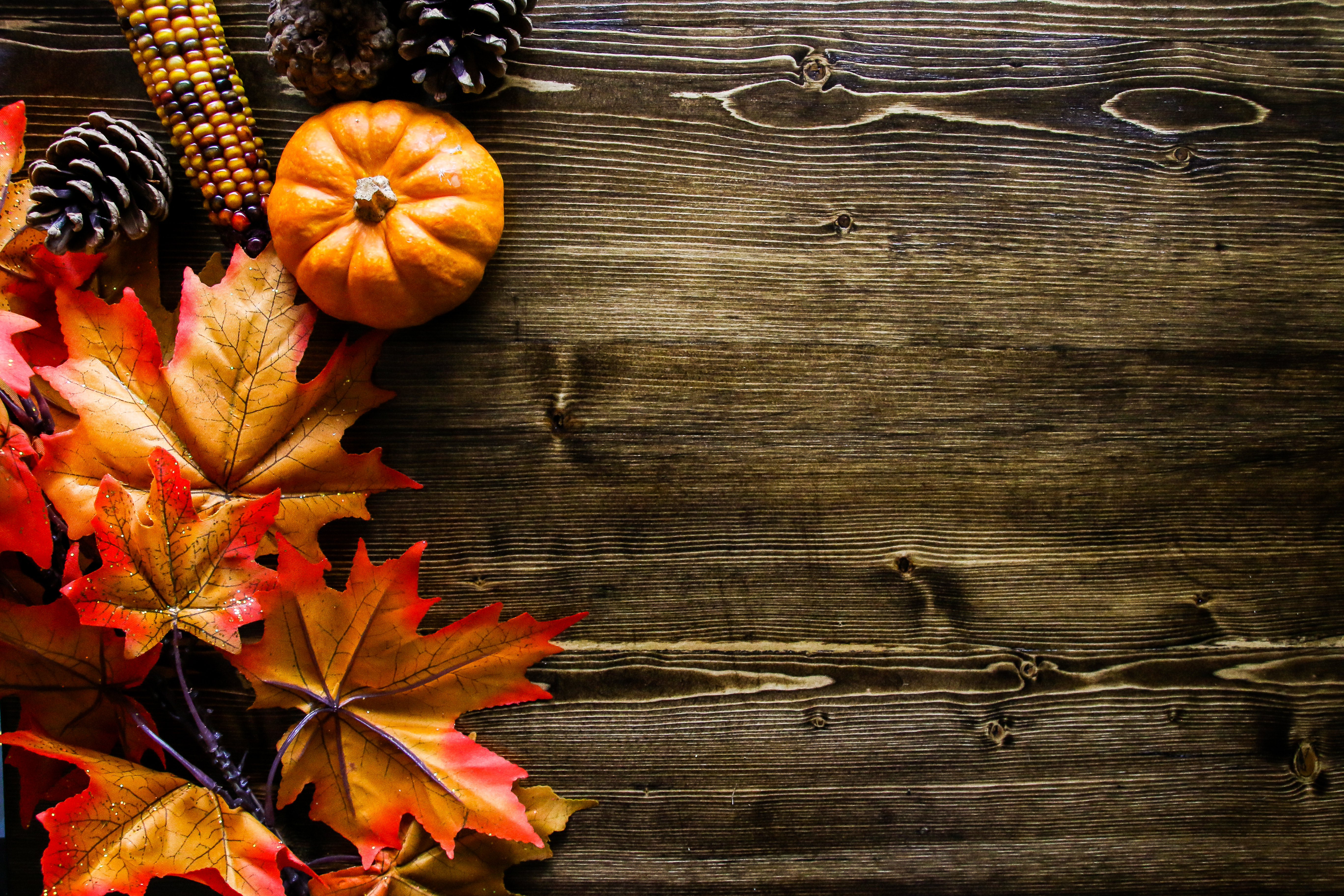 thanksgiving pictures free download, pumpkin #1699