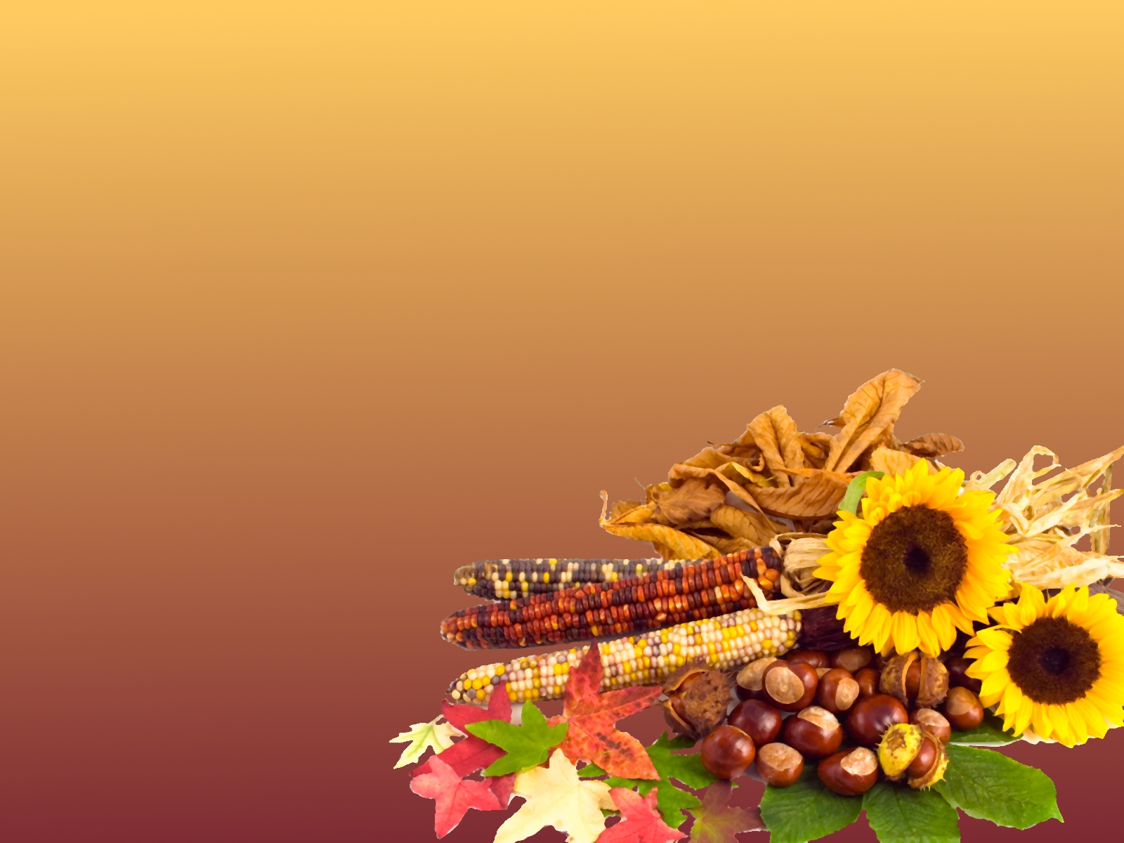chamomile, hazelnut, thanksgiving free wallpapers #1704
