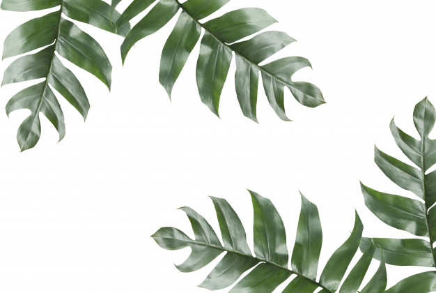 background tropical leaves with copy space photo #167