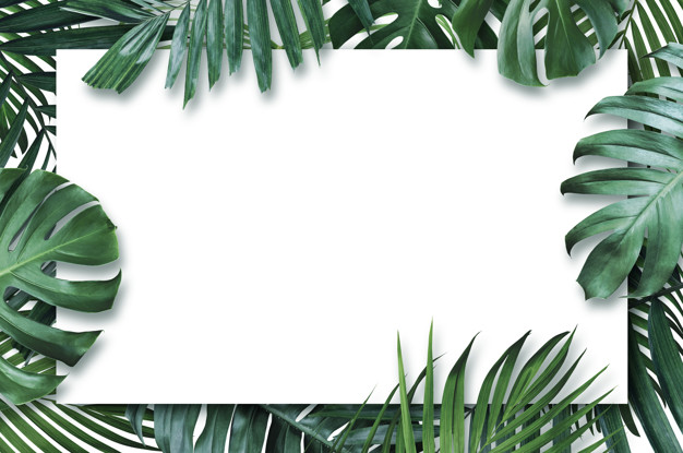 powerpoint background summer tropical leaves with blank paper white #171