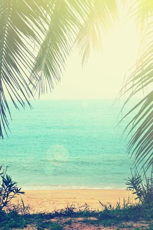tropical background with beach palm trees #141