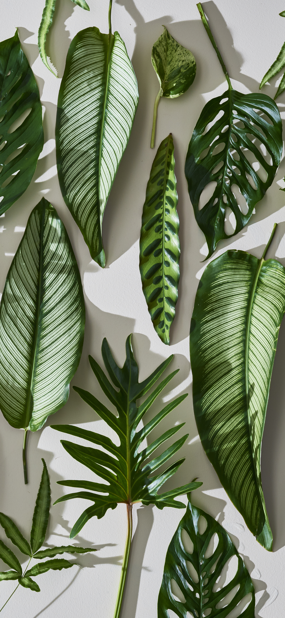 tropical leaves freshen with this tropical leaf mobile wallpaper #161