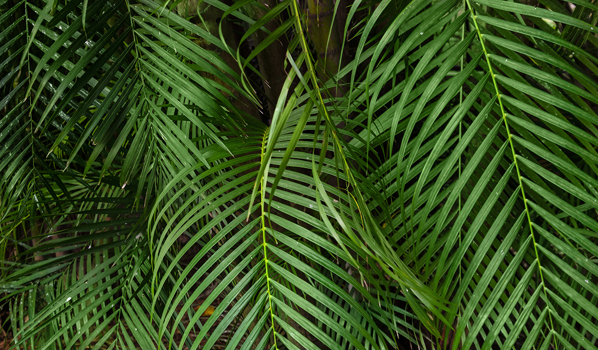tropical leaves lush tropical background palm leaves #163