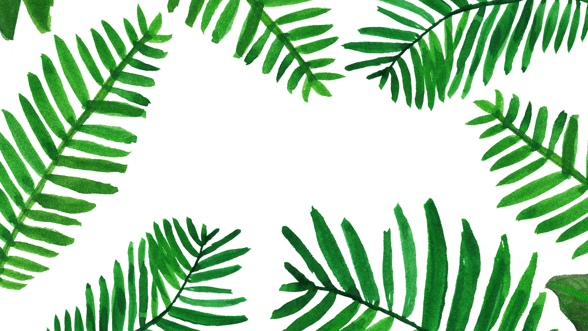 tropical leaves tropical palm leaf wallpaper images #157