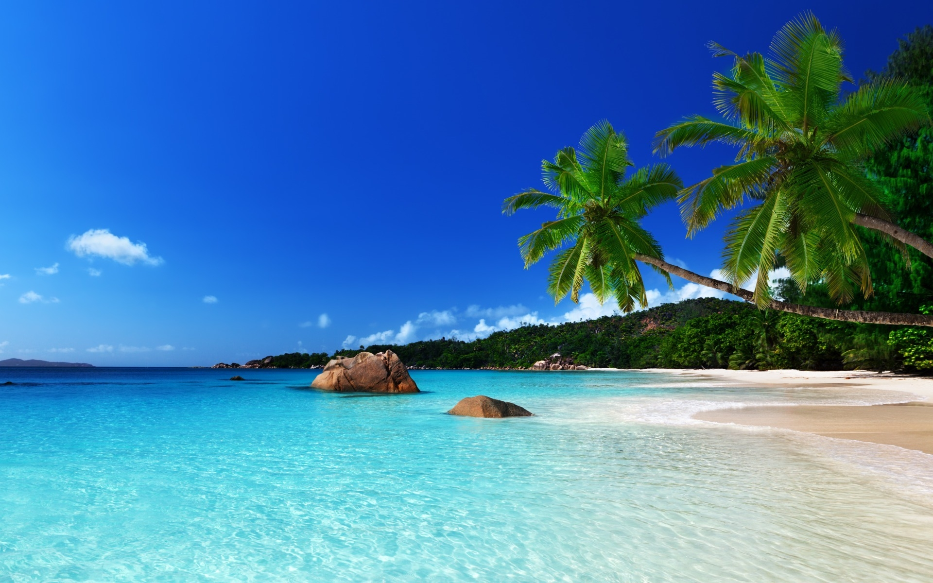 tropical wallpaper background image #120